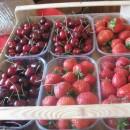 Češnje in jagode na kvadrat – Sadna cesta