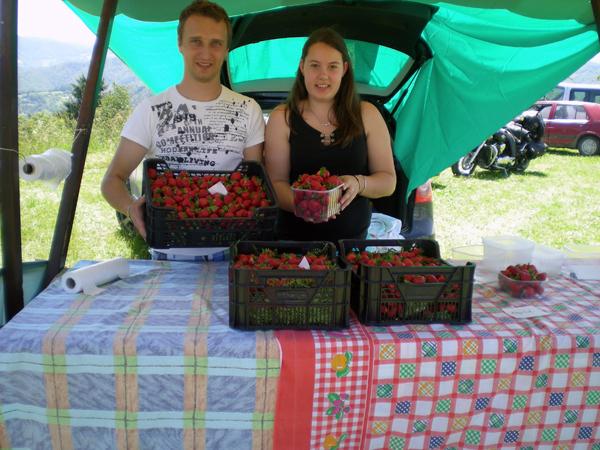 Domače janške jagode na Jagodni nedelji 2014